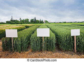 divided sectors demo plots of cereals with pointers, new varieties of winter wheat