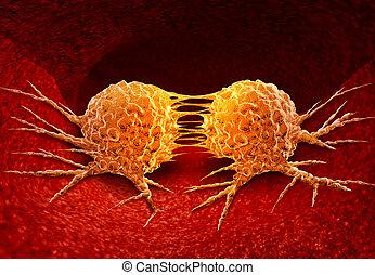 dividere, cancro, cellula