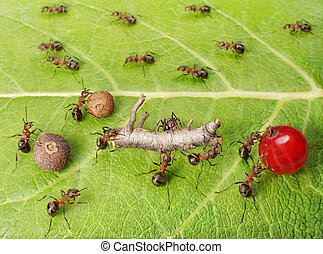 dividing line and cargo traffic at ants work path in anthill, teamwork
