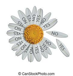 Divine decision daisy