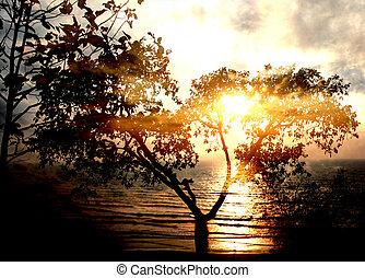 Divine Sunset Tree