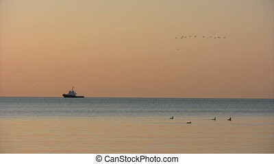 Diving Geese - tugboat at sunrise with geese diving