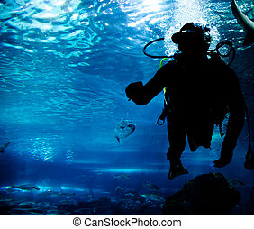 Diving in the ocean underwater - Diving in the ocean. Diver...