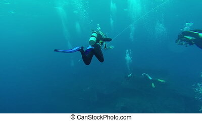 Diving in the red sea a group of divers submerged