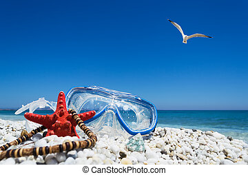 diving mask under a flying seagull - diving mask, starfish ...