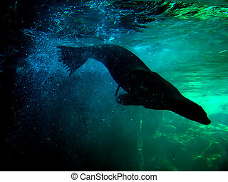 Silhouette of a seal at an underwater aquarium.