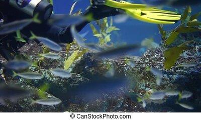 diving - shark