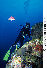 Adventure Diving on a Coral Reef, Indian Ocean