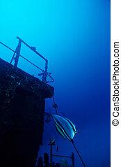 Adventure Diving on a sunken Ship wreck