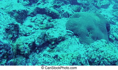 Diving. View of seabed in Andaman sea, Thailand - Scuba...