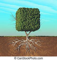 divisé, arbre, cubique