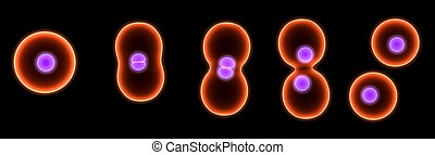 division, cellule