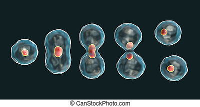 Division of a cell, mitosis concept, 3D illustration