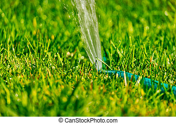 DIY lawn sprinkler working in back yard grass