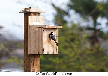 DIY wood birdhouse and Black-capped Chickadee