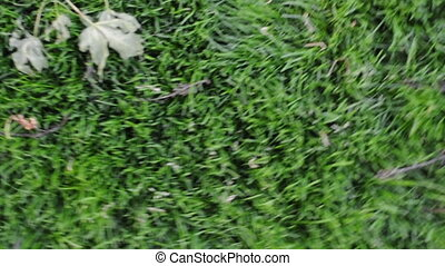 Dizzy Spins Above Grass - Dizzy motions and spinning above a...