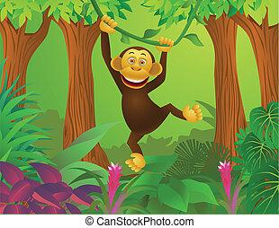 djungel, schimpans