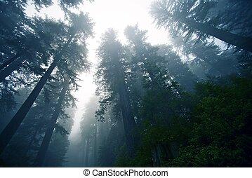 djup, dimmig, skog