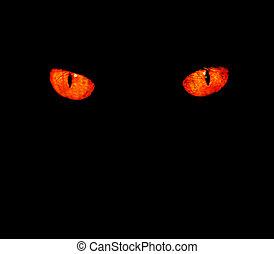 djur, ögon, in, svart