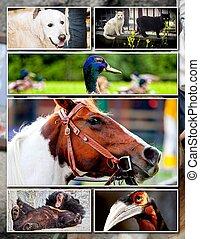 djur, collage