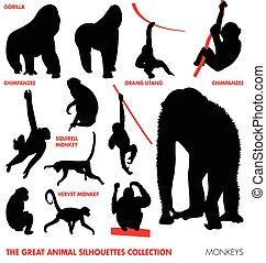 djur, kollektion, -, apor