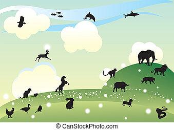 djur, kollektion