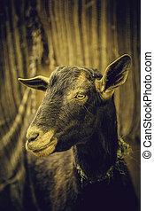 djur, lantgård, sheep