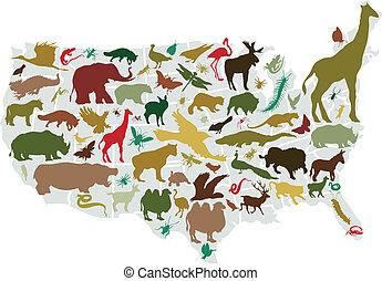 djuren, av, amerika