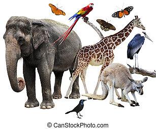 djuren, collage