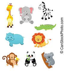 djuren, safari