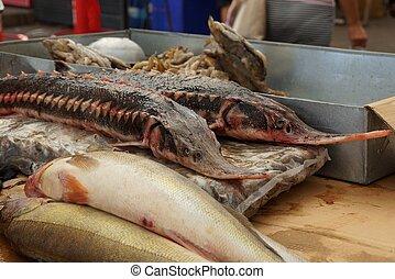 dlouho, velký, nedávno rybolov, jeseter, dále, ta, čelit