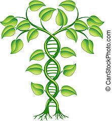dna, 植物, 概念