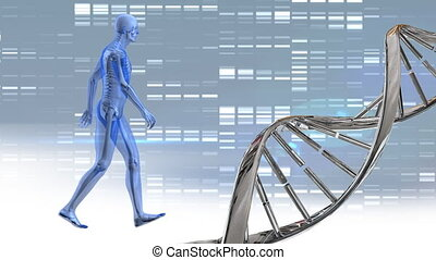 DNA double helix and digital human