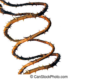 A photo illustration of DNA double helix created from rose stems with thorns on a white background.