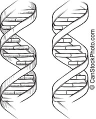 DNA double helix sketch - Doodle style genetic DNA triple...