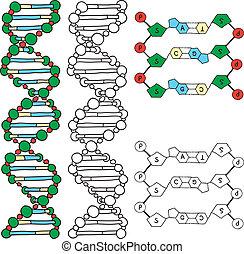 DNA - helix molecule model, hand-drawn illustration