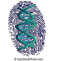 dna, impronta pollice
