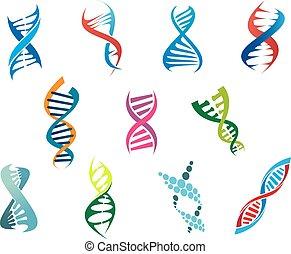DNA molecules and symbols - Colorful vector DNA molecules...