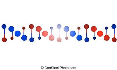 DNA protein chain