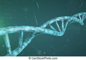 dna strand in a human cells