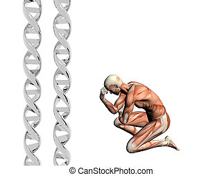 DNA strand, muscular man. - Two dna strands, muscular...