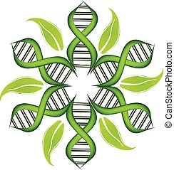 DNA Strands logo - DNA Strands with leafs on circle vector...
