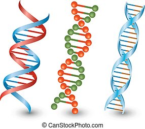 Dna strands. Vector on the white background