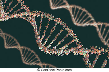 DNA Structure - Double helix structure of the DNA in depth...