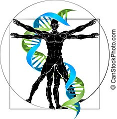 DNA medical concept with Vitruvian man figure like Leonard Da Vinci drawing and double helix strand
