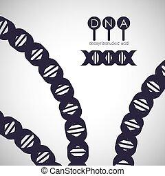 dns, design, struktur, chromosom