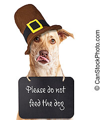 """Hungry dog wearing """"Please do not feed the dog"""" sign around neck wearing Thanksgiving Pilgrim hat"""