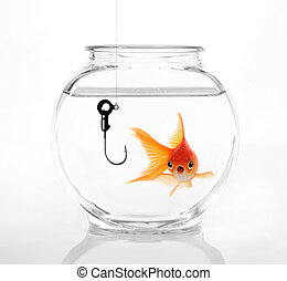 Do Not Take The Bait - Gold Fish Realizing a Hazardous...