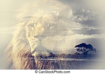 dobbel eksponering, i, løve, og, kilimanjaro mount, savanna, landskab.