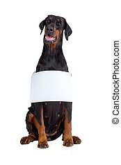 Doberman dog with blank sign